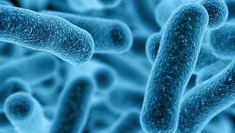 Utjecaj crijevnih bakterija na ponašanje djece