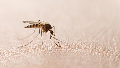 Virus Zapadnog Nila - PLIVAzdravlje
